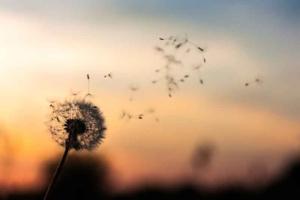 aldeanactiva mfrespirar3 - Mindfulness: respirar y sentir
