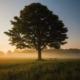 Encontrar el silencio a través de Mindfulness
