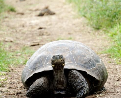 Avanzar despacio pero seguro, como las tortugas.