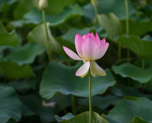 Retiro de silencio Mindfulness