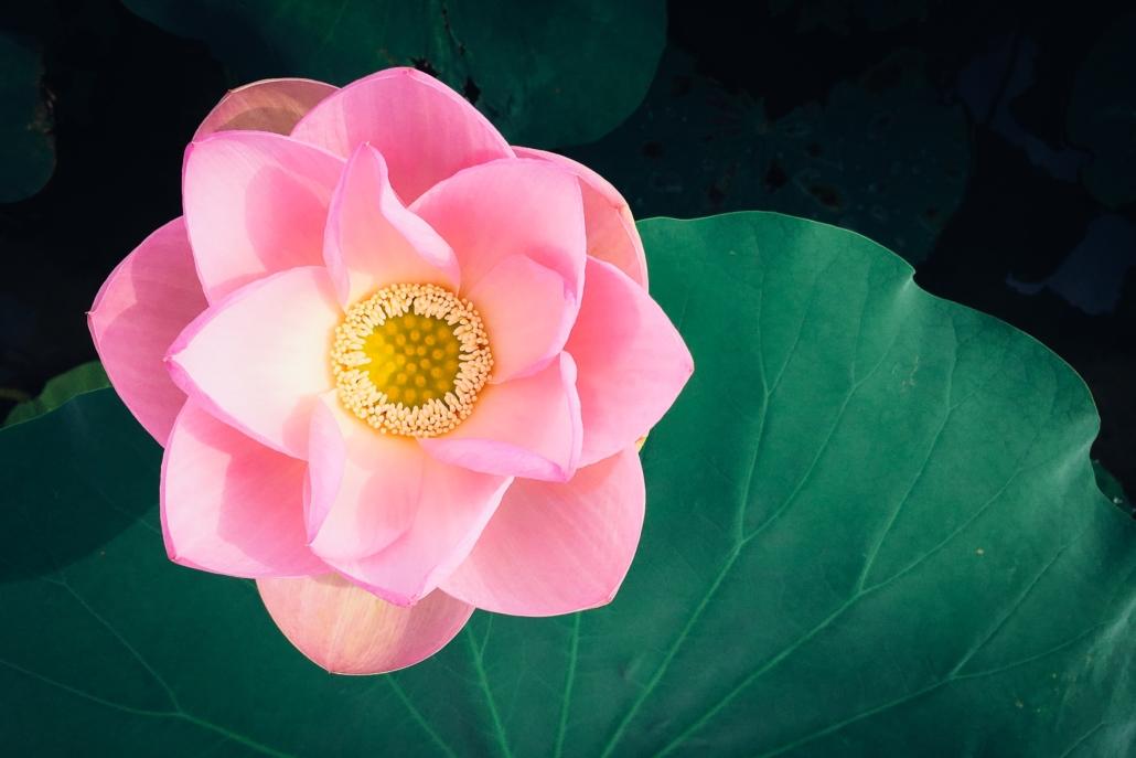 kumiko shimizu X1IMq1 hhYI unsplash - Mindfulness para retomar la vida después del confinamiento (online)