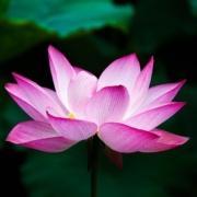 Cultivar la atención plena. Programa de Mindfulness MBCT