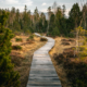 Programas eficaces de Mindfulness