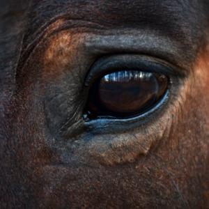 almudena de andres coaching caballos 2 - Una nueva mirada ante la incertidumbre. Coaching con caballos y Mindfulness. 14 de mayo de 2021.