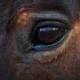 almudena de andres coaching caballos 2 - Una nueva mirada ante la incertidumbre. Coaching con caballos y Mindfulness