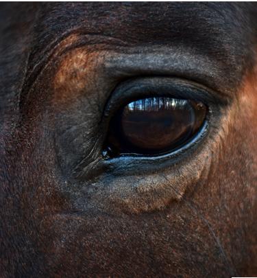 almudena de andres coaching caballos 2 - Coaching con caballos y Mindfulness. Una nueva mirada ante la incertidumbre. 14 de Mayo