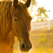 Coaching con caballos y Mindfulness