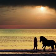 Coaching con caballos en Madrid