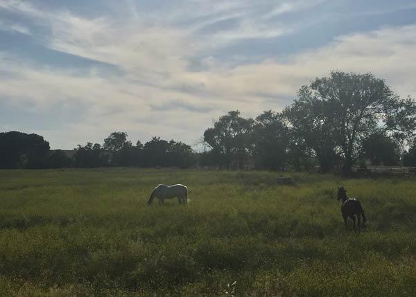 Coaching con caballos en Madrid. Venta de la Rubia