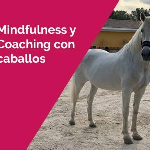 Mindfulness y Coaching con caballos en Madrid